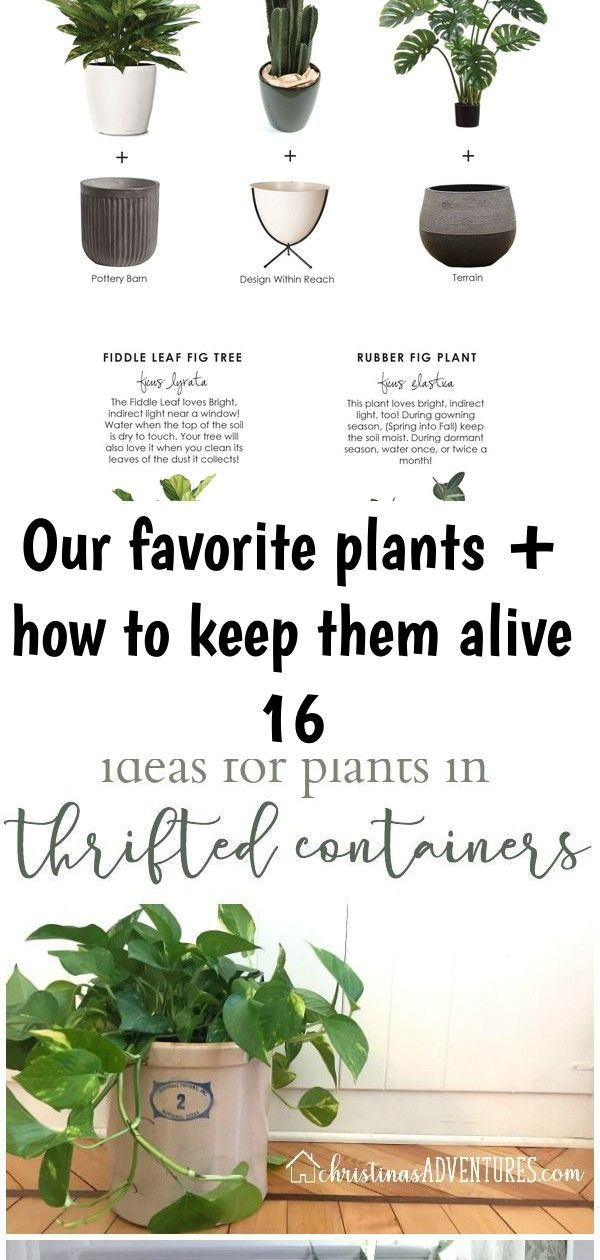 Our favorite plants  how to keep them alive 16 Our Favorite Plants  How to Keep Them Alive Giving you ideas on how to see items at the thrift store in new ways  and how t...