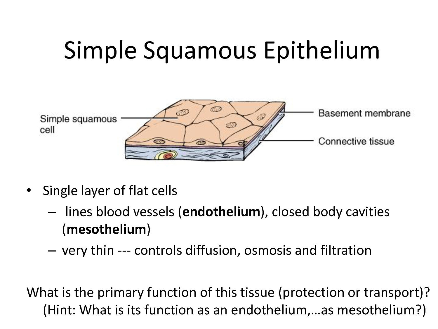 simple squamous epithelium - Google Search | kind of a mishmash of ...