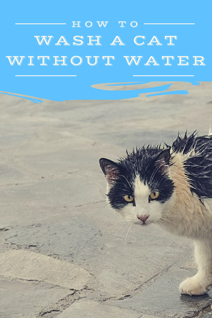 How To Wash A Cat Without Water With Images Cat Bath Cats Pets