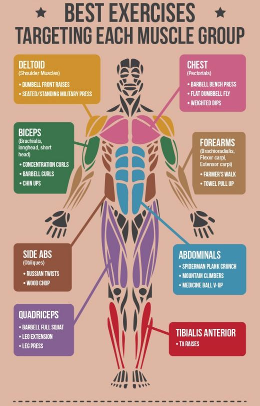 Strength Training Counteracts Muscular Atrophy in Old Age | ANATOMY ...