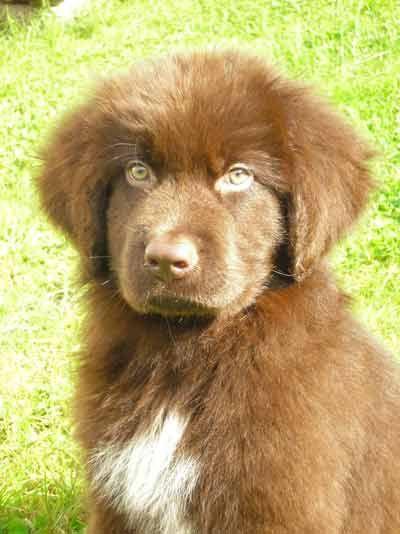 Ahhhhhhh I Want This Kind Of Dog Sooooooooo Bad This