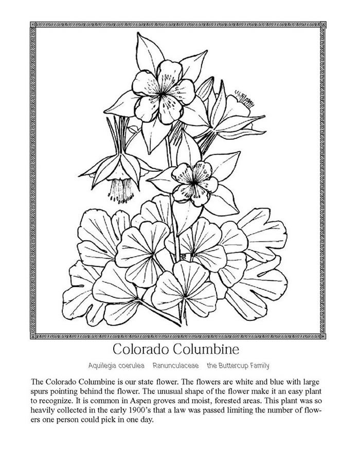 Colorado Kids Coloring Pages Print This Page Color And Enjoy Flower Coloring Pages Flag Coloring Pages Printable Flower Coloring Pages