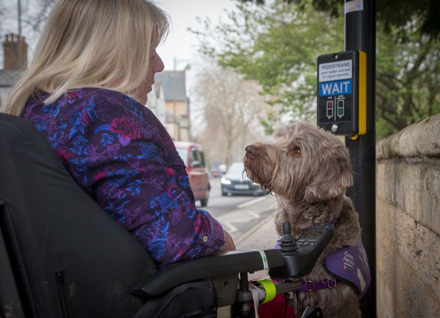 Assistance Dogs Charity Category 3rd Place Winner You Re Safe With Me By Melissa Bastin Uk Assistance Dog Dog Photograph Dog Charities