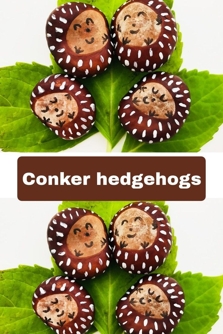 Cutest hedgehog conkers #herbstfensterdekokinder