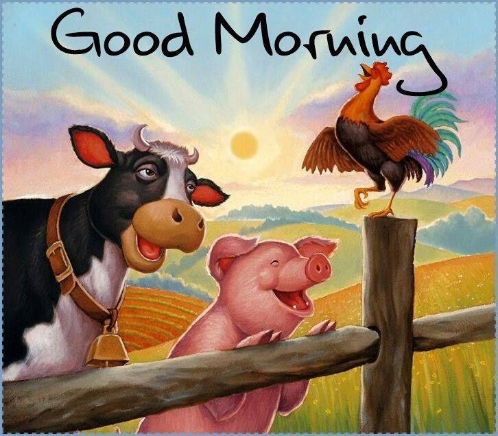 Bonjour bonjour   – Good Morning / happy Weekend