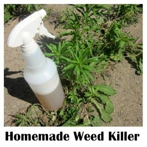 Easy recipe for homemade vinegar weed killer iq crafts - Weed killer safe for vegetable garden ...