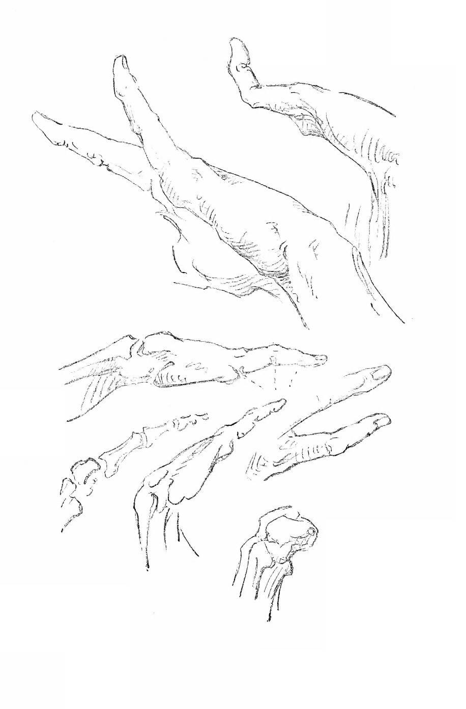 Constructive Anatomy by George Bridgman   Anatomie Hände und Füße ...