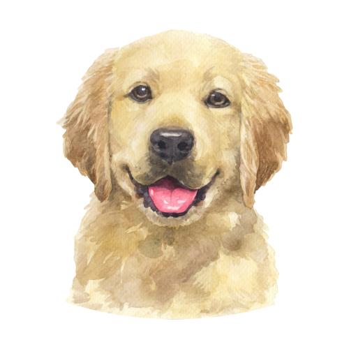 Adorable Golden Retriever Puppy Watercolor Art In 2021 Golden Retriever Retriever Puppy Golden Retriever Puppy