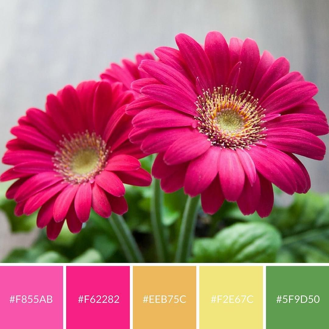 Bold Bright Spring Flower Color Palette Great For Digital Art And Brand Colors Flowers Colorful Flowers Good Morning Wallpaper