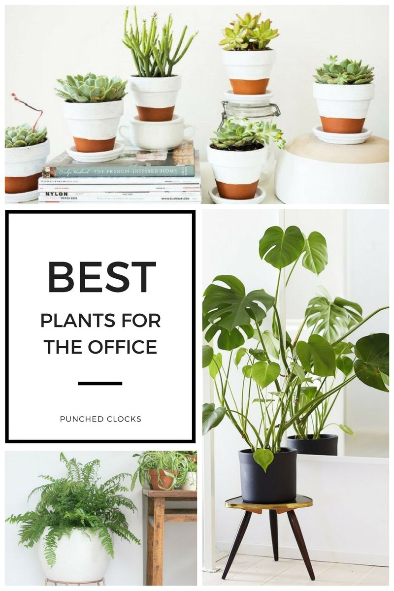 Best Plants For The Office