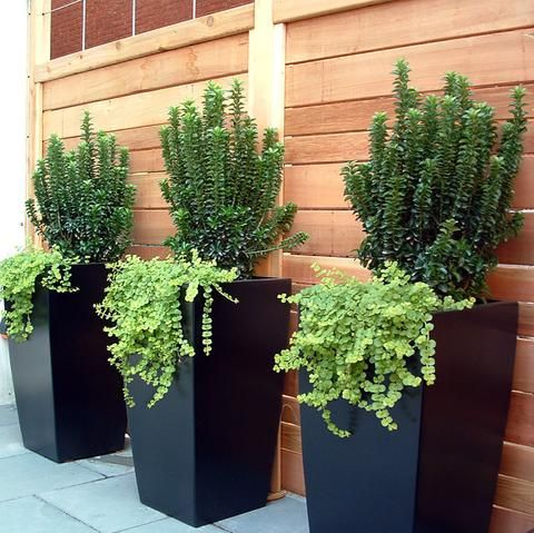 Large Tapered Square Planter Fiberglass 42 48 60 Tall Toulan By Jay Scotts Tall Outdoor Planters Potted Plants Outdoor Outdoor Planters Cheap large planters for outdoors