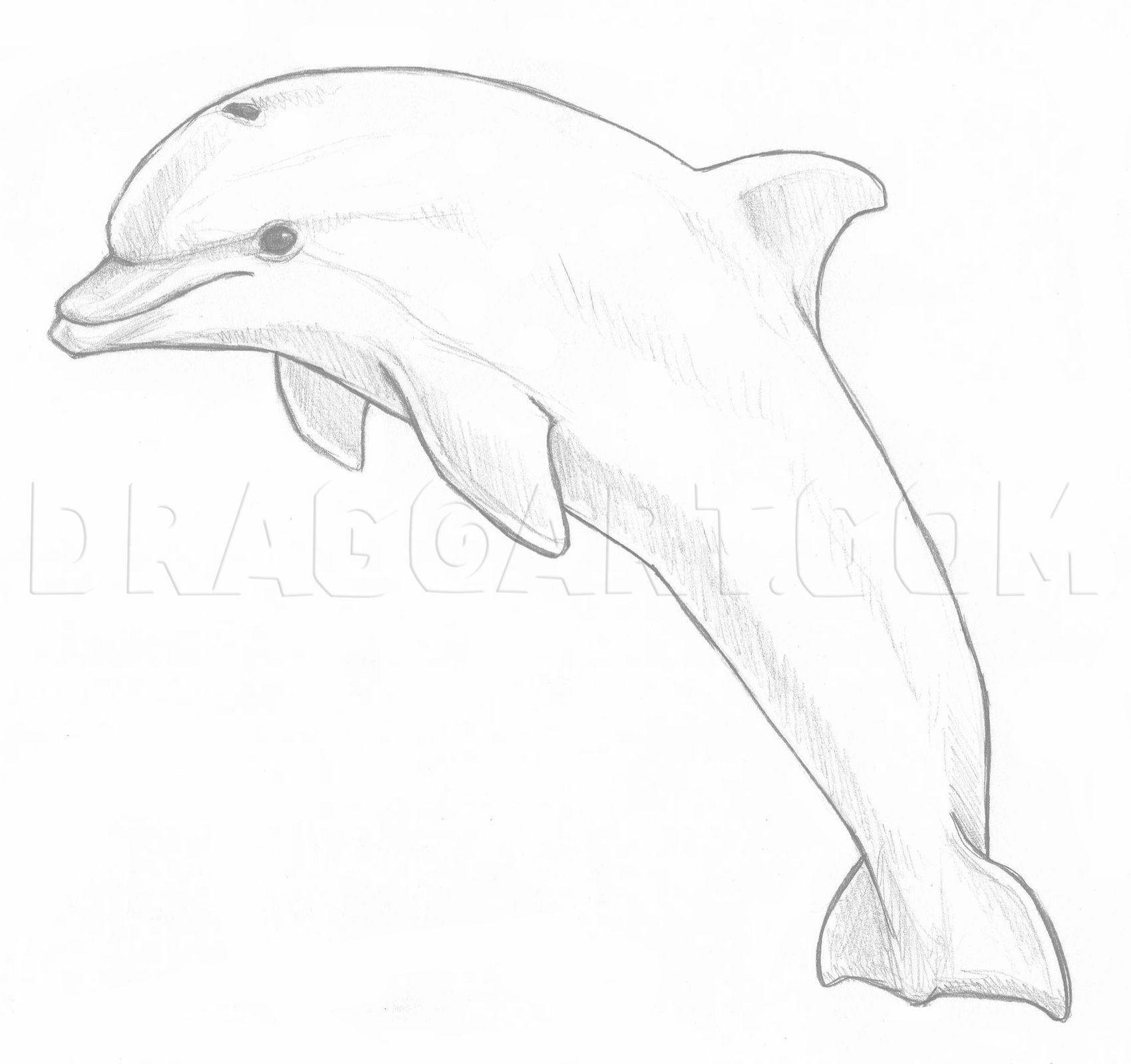 How To Draw A Jumping Dolphin, Step by Step, Drawing Guide