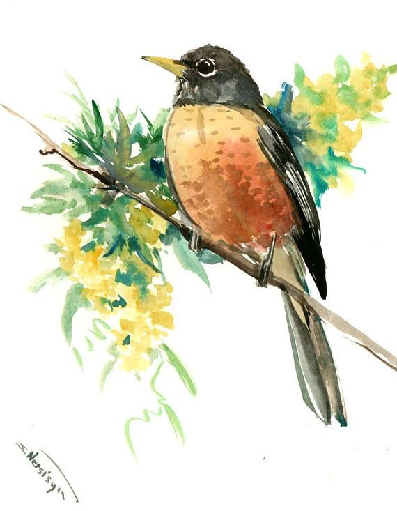 American Robin Artwork Original One Of A Kind Watercolor