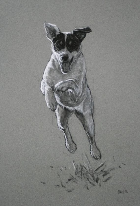 Photo of Jack Russell Terrier dog art print, black and white dog wall art fine art print 'Leap of Faith' from an original charcoal and chalk