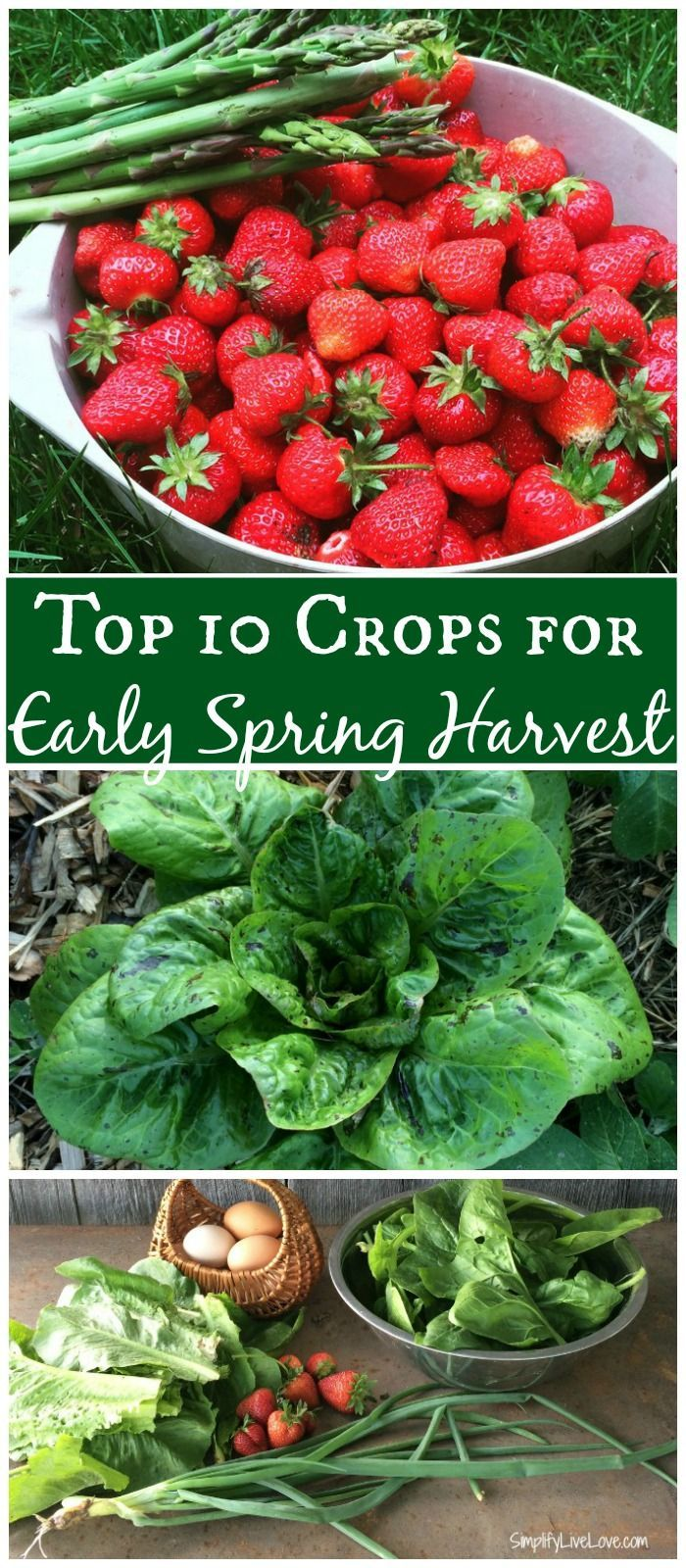 top 10 plants for early spring harvest early spring plants and