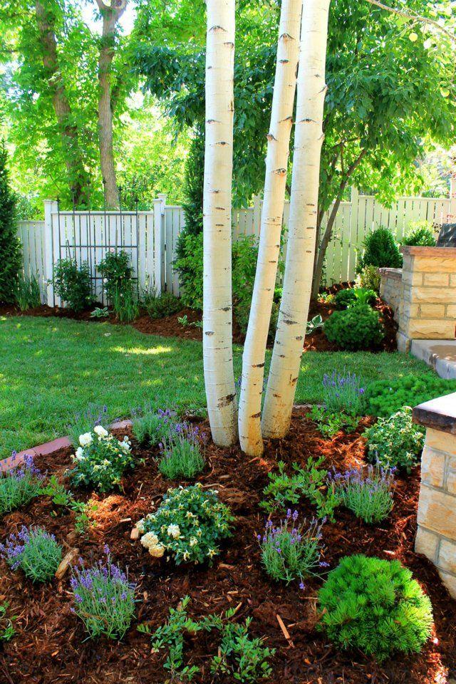 clump aspen tree lavender mulch