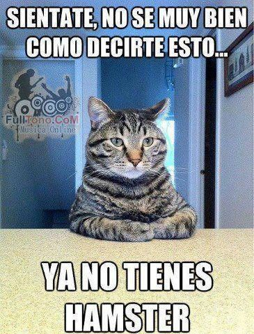 Confesiones De Un Gato Domestico Segnorasque Fotos Con Gatos Meme Gato Hamster