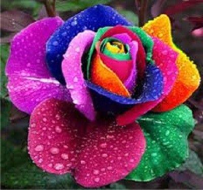 Resultado de imagen para imágenes flore hermosas del universo