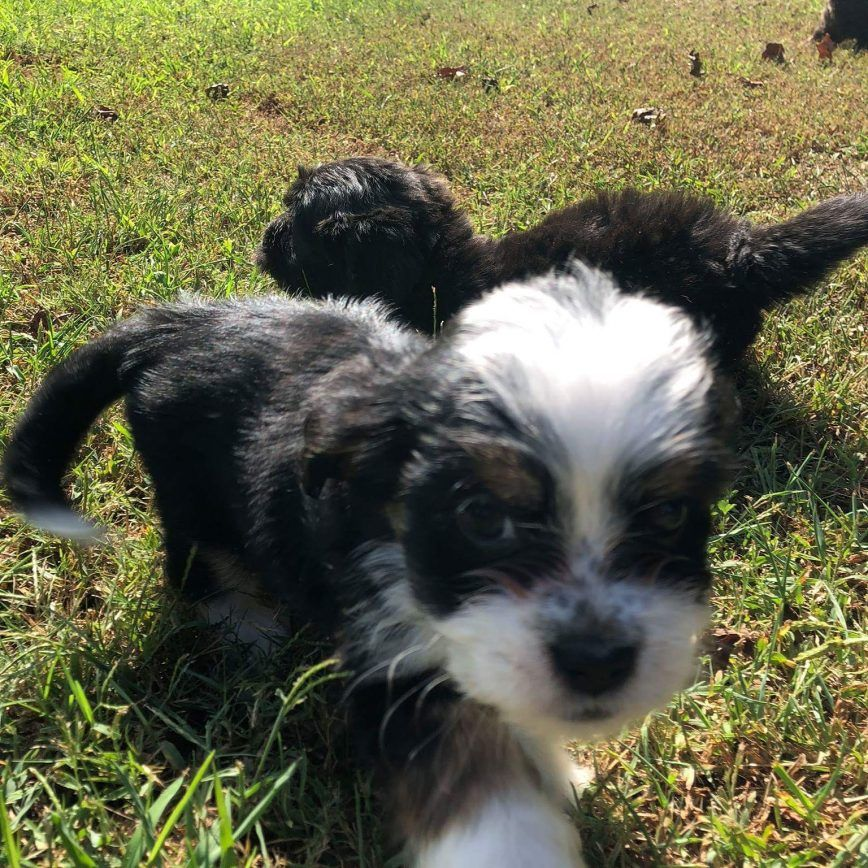 Lucy Mixed Breed Mixed breed puppies, Puppies for sale