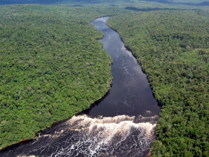 En Que Mar Desemboca El Rio Amazonas Busqueda De Google Rio Amazonas Amazonas Busqueda De Google