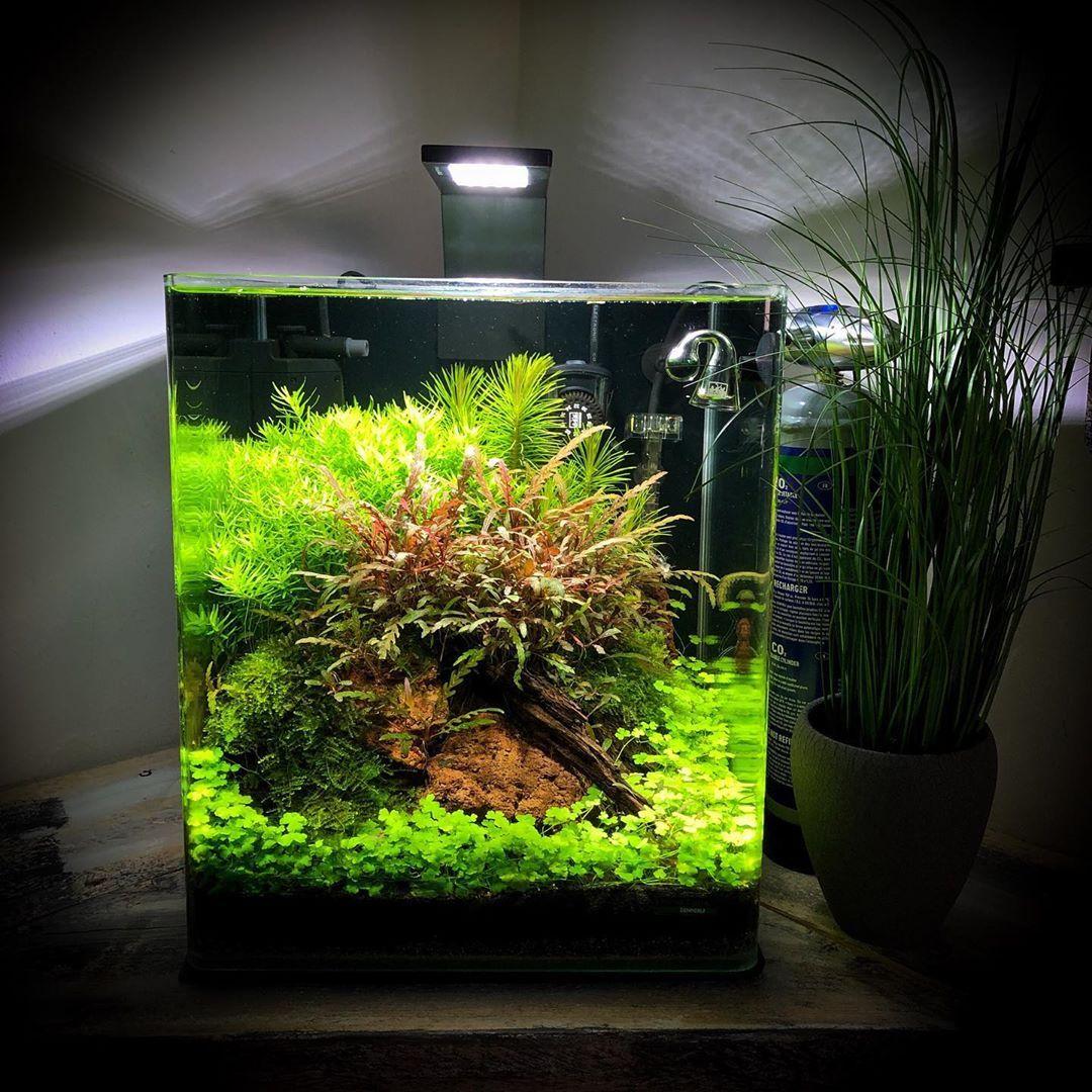 Dennerle On Instagram The Dennerle Team Wishes You A Great Weekend Scaped By Volker Jochum Follow Aquascape Aquarium Nano Aquarium Aquascape