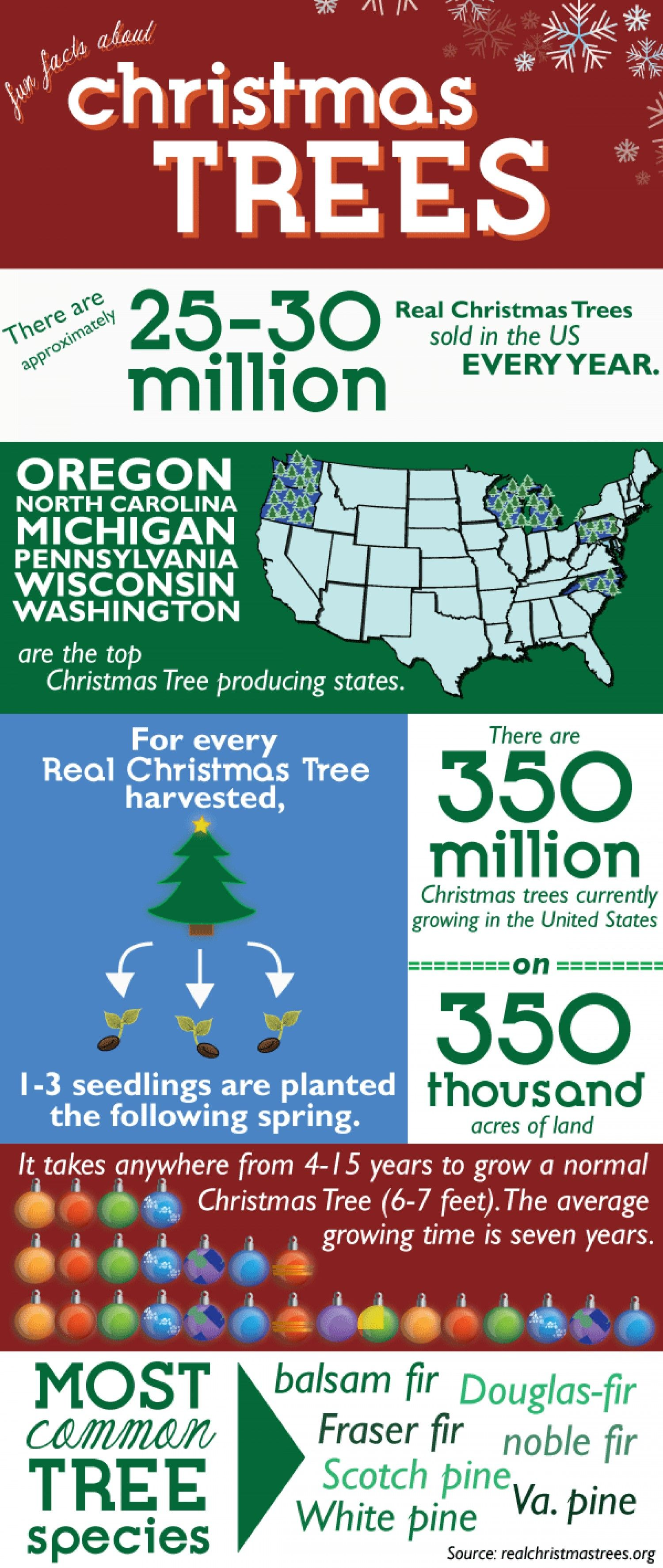 Christmas Trees In The Us Infographic