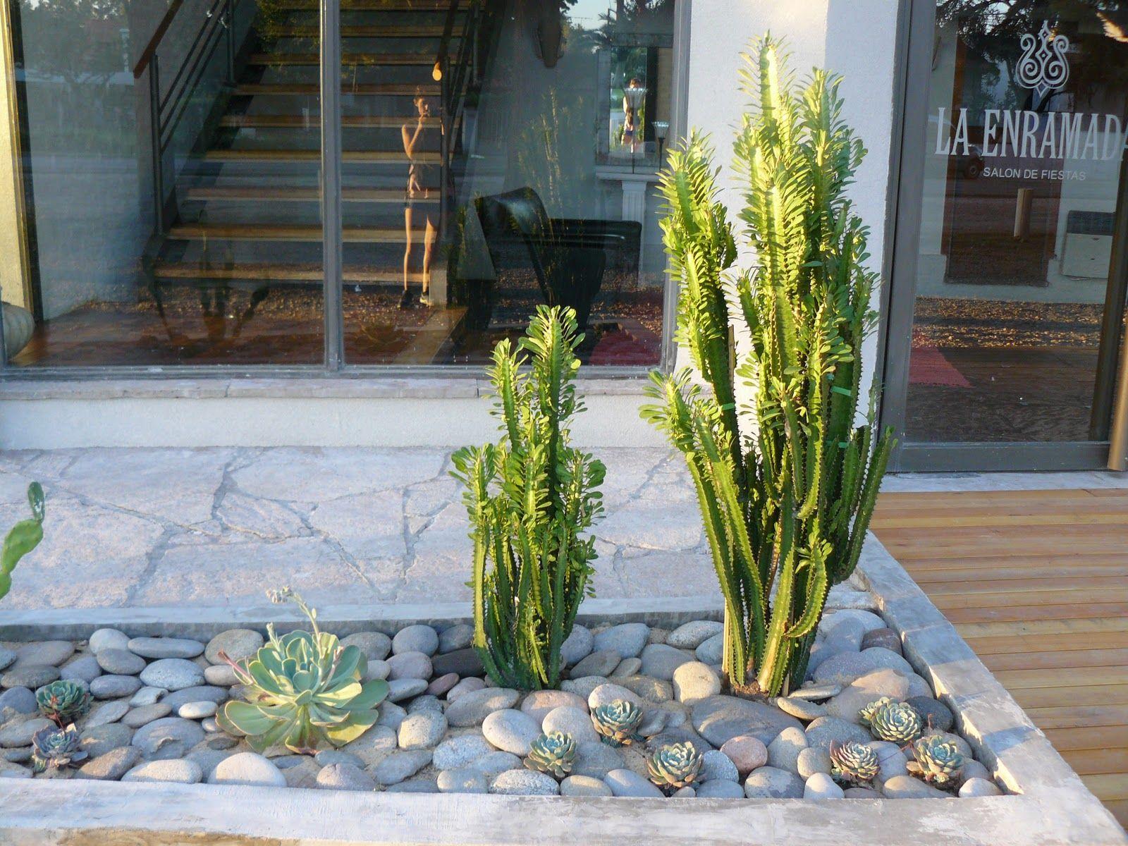 jardines de cactus y suculentas jardn de cactus y suculentas - Jardn De Cactus
