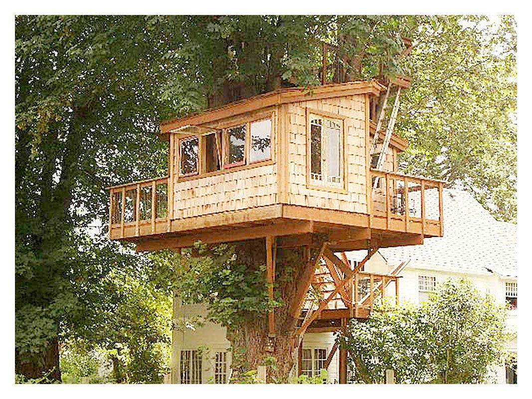 Cool Great Tree House Plans And Designs If You Have A Large Tree