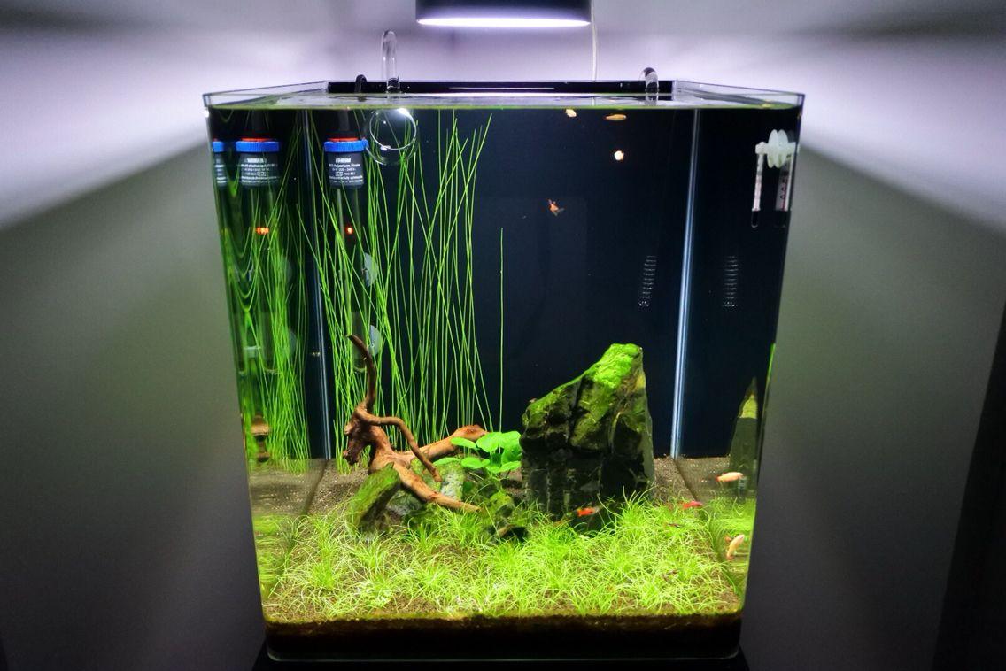 nano cube dennerle 60 l nanocube 60 l nano aquarium. Black Bedroom Furniture Sets. Home Design Ideas