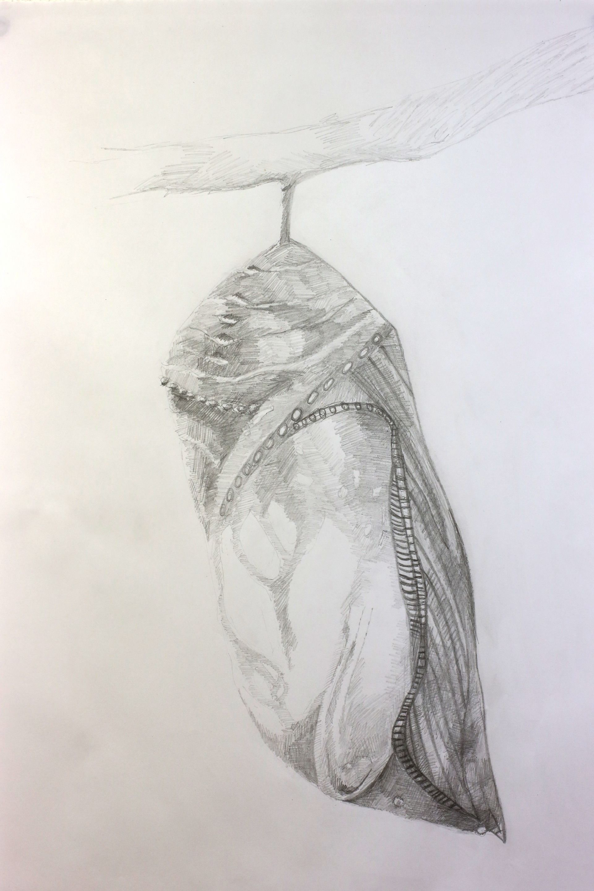 Butterfly Cocoon Drawing chrysalis drawing - Go...