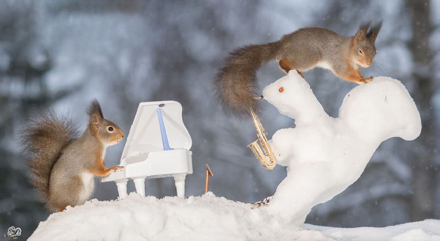 Wild Red Squirrels with Tiny Musical Instruments, http://petsvox.com/squirrels-musical-instruments/