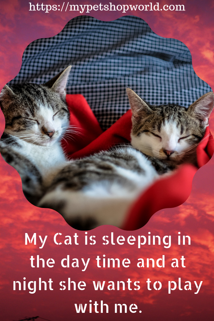 12 Days Is All You Need With This Secret Cat Training There Are No More Sleepless Nights Sleeping Kitten Cats Cat Sleeping