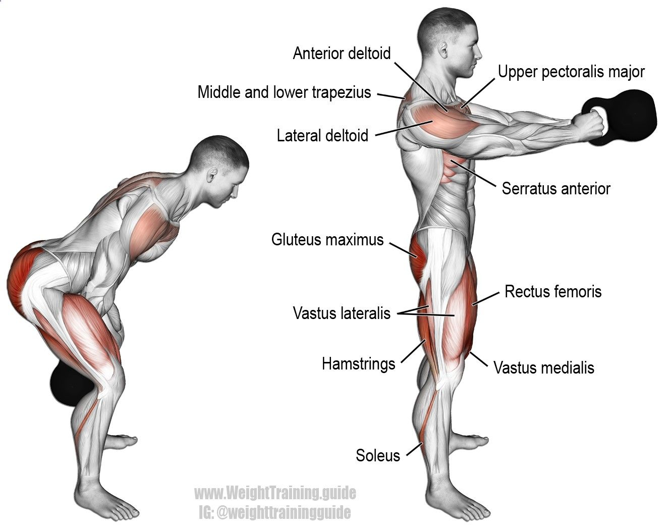 The plate front raise is an auxiliary shoulder exercise that targets ...