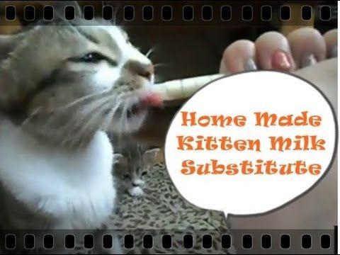 Emergency Homemade Kitten Milk Recipe CatDogCuties