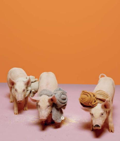 piggies from anthro catalog