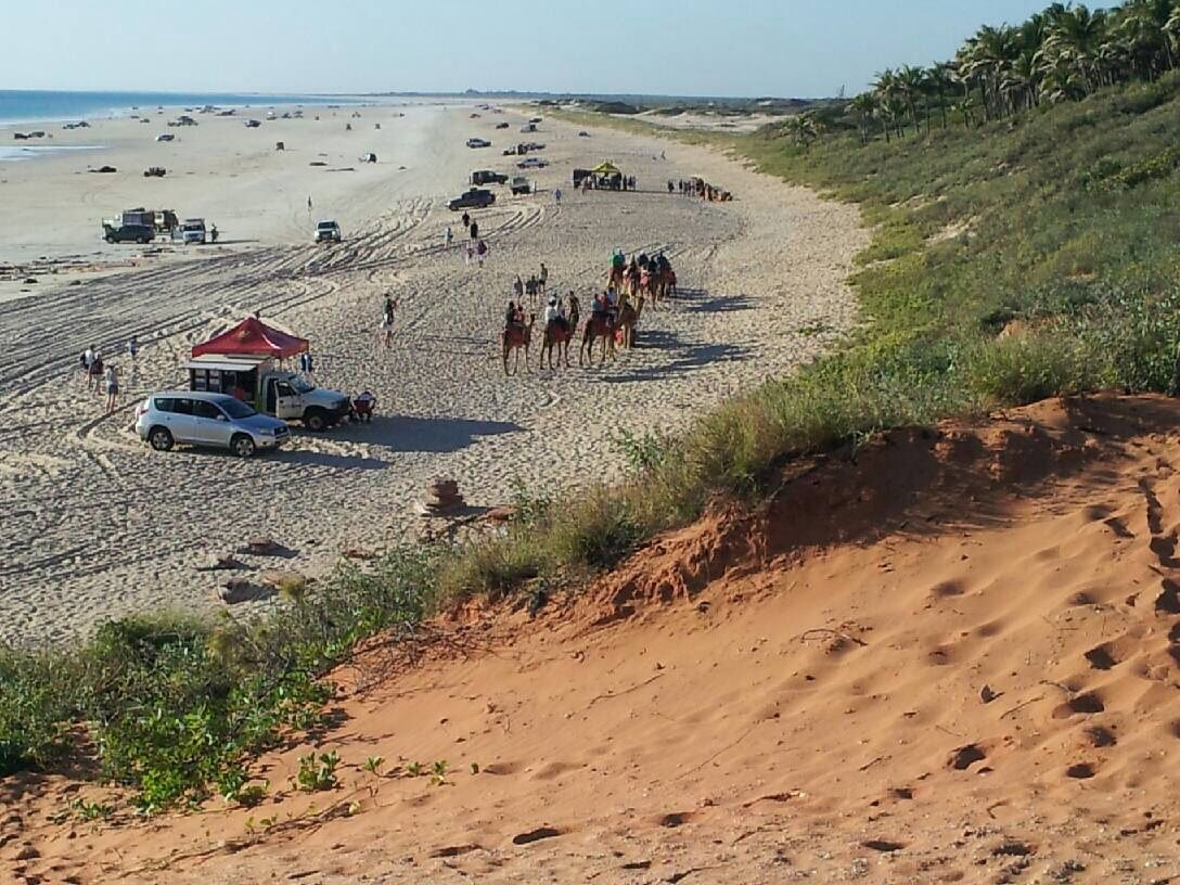 Camels on Cable Beach, WA