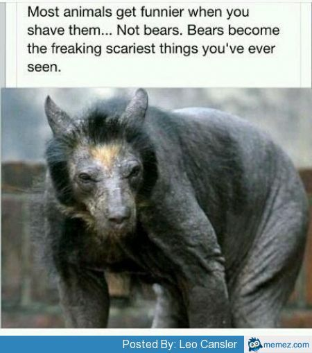 Thats one scary bear!