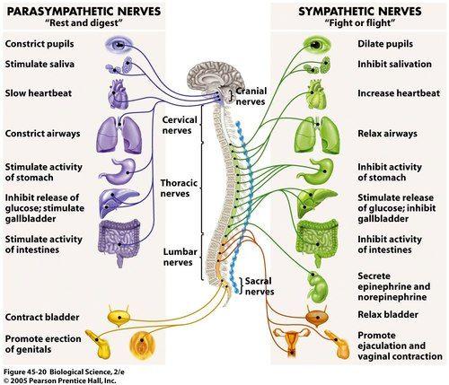 best Nursing school images on Pinterest   Nursing schools     Medscape Reference