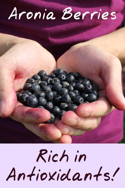 Aronia has the highest content in antioxidants #antioxidants #healthy #berry #fruits #berries #aronia #aroniaberry #chokeberry #healthfood #superfood