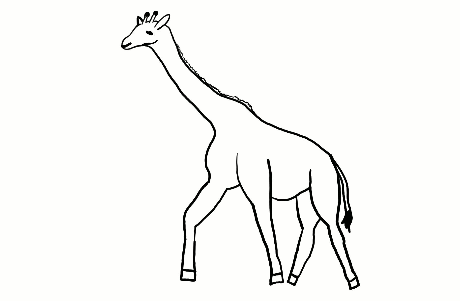 Giraffe Outline Outline Zentangle Giraffe