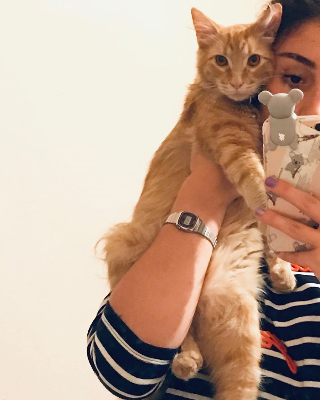 My Cat Wont Eat Or Drink What Can That Mean Cute Cat Gif Kittens Cute Cats And Kittens