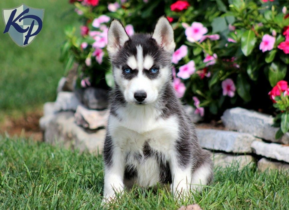 Puppy Finder Find Buy A Dog Today By Using Our Petfinder