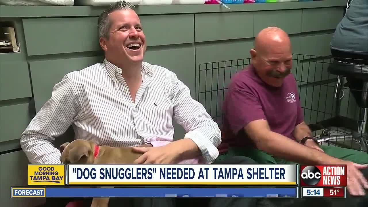 Dog Snuggling Volunteers Needed At The Humane Society Of Tampa Bay Shelter Puppies Humane Society Volunteer