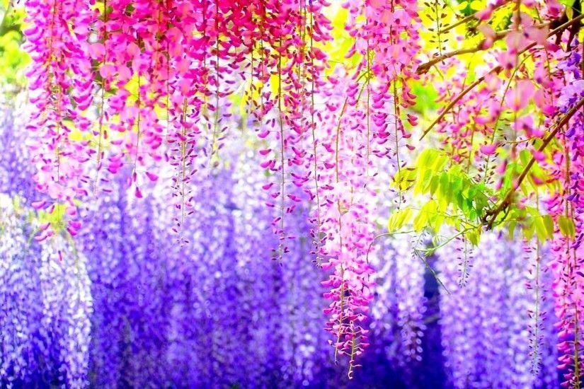 Vertical spring flowers background desktop 1920x1080 for android vertical spring flowers background desktop 1920x1080 for android tablet mightylinksfo