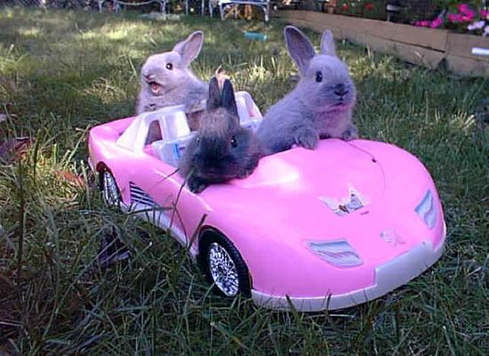 The Funniest Driving Animals Of All Time (PHOTOS) from Huffington Post