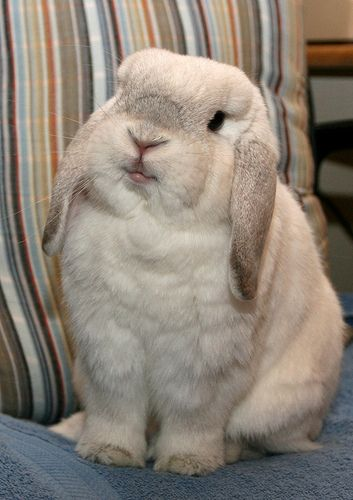 This bunny looks like a stuffed toy!