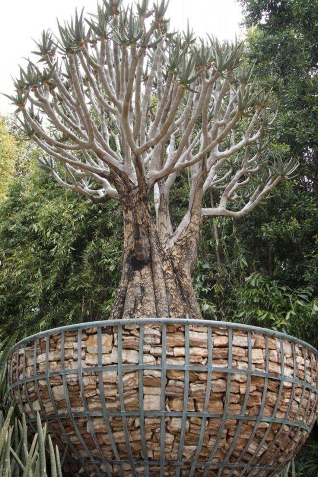 Gabionen Hochbeet Rund Selber Bauen Baum Pflanzgefaess Exotisch Baumart Gabionen Hochbeet Hochbeet Gabionen