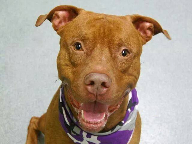3 YEAR OLD RED HUNK YOGI IS SAFE ♡ ♡ ♡ ♡ Rescue dogs