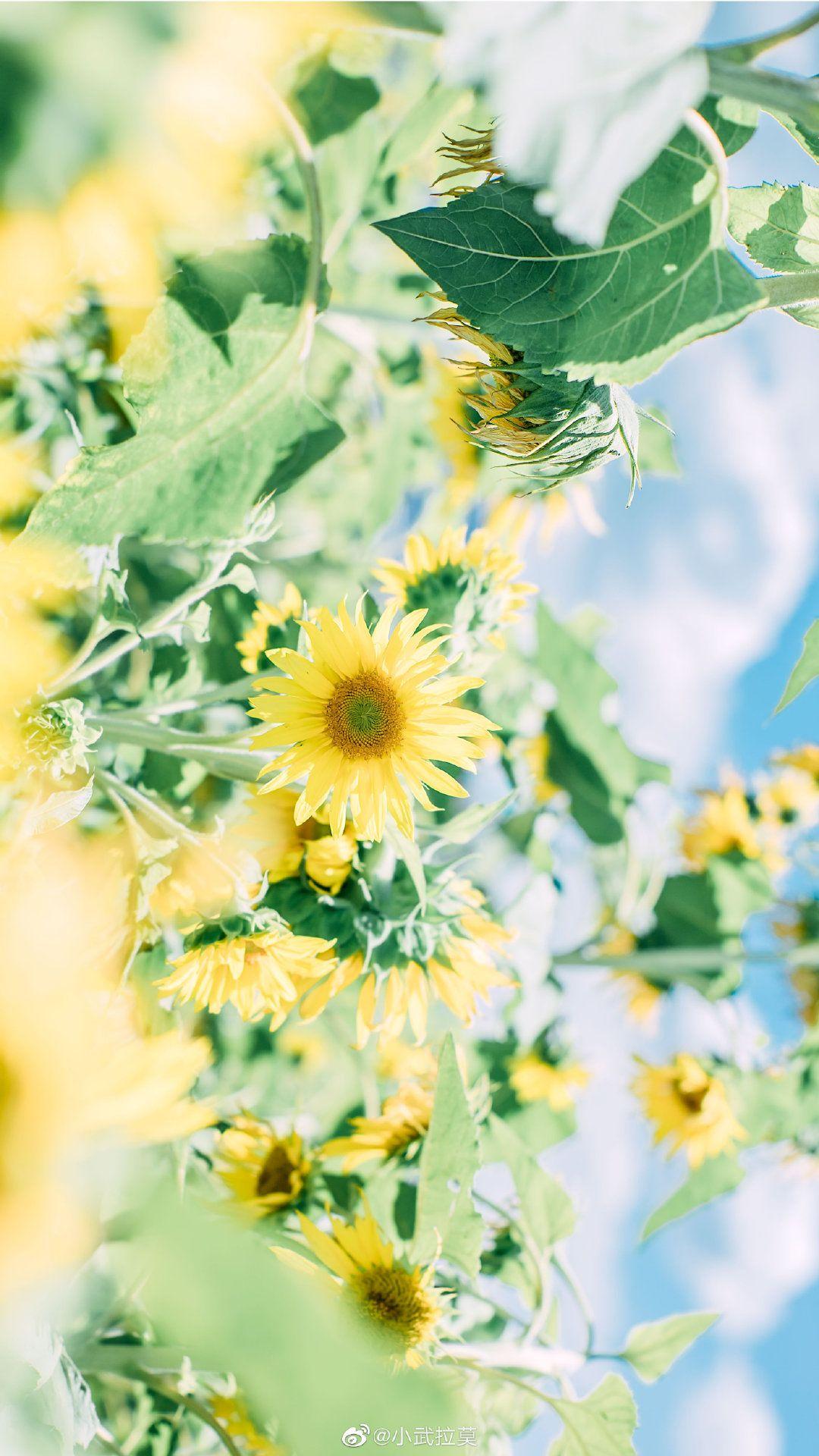 Ghim của Binh.hg6 trên Flower