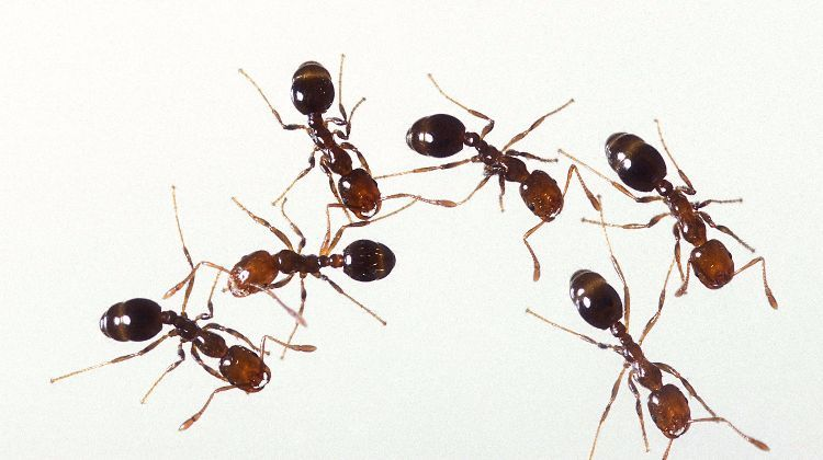 Don T Toss Out Your Coffee Grounds Here Are 12 Awesome Ways To Use Them At Home Types Of Ants Get Rid Of Ants Fire Ants
